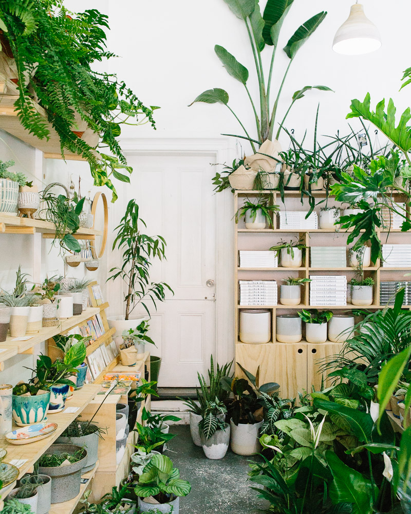 Plants and ceramics on display in local Melbourne store