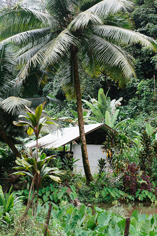 A hut amongst the flora of Tahiti