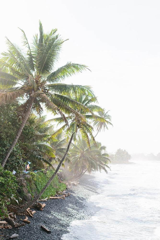 Palm trees off the coast of Tahiti
