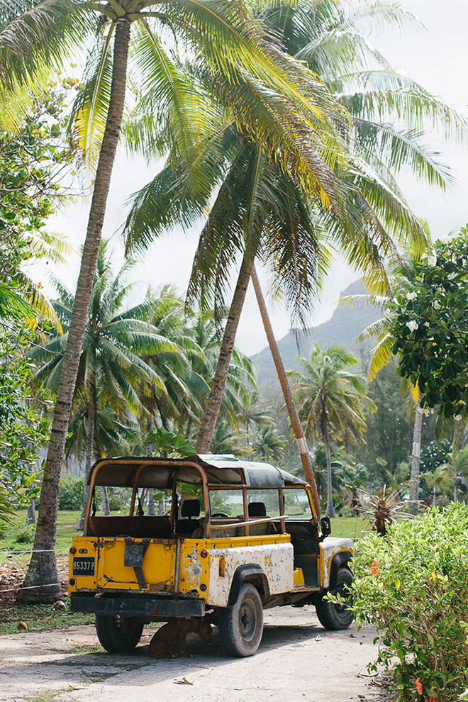 A local mans yellow truck parked under palm trees