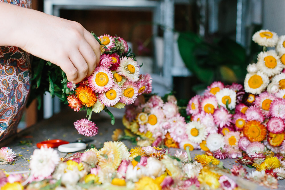 Florist picking the blooms off strawflowers