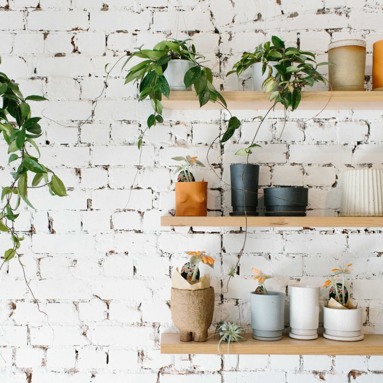 Local Melbourne ceramicists work on display at plant store Nature Boy Nrth