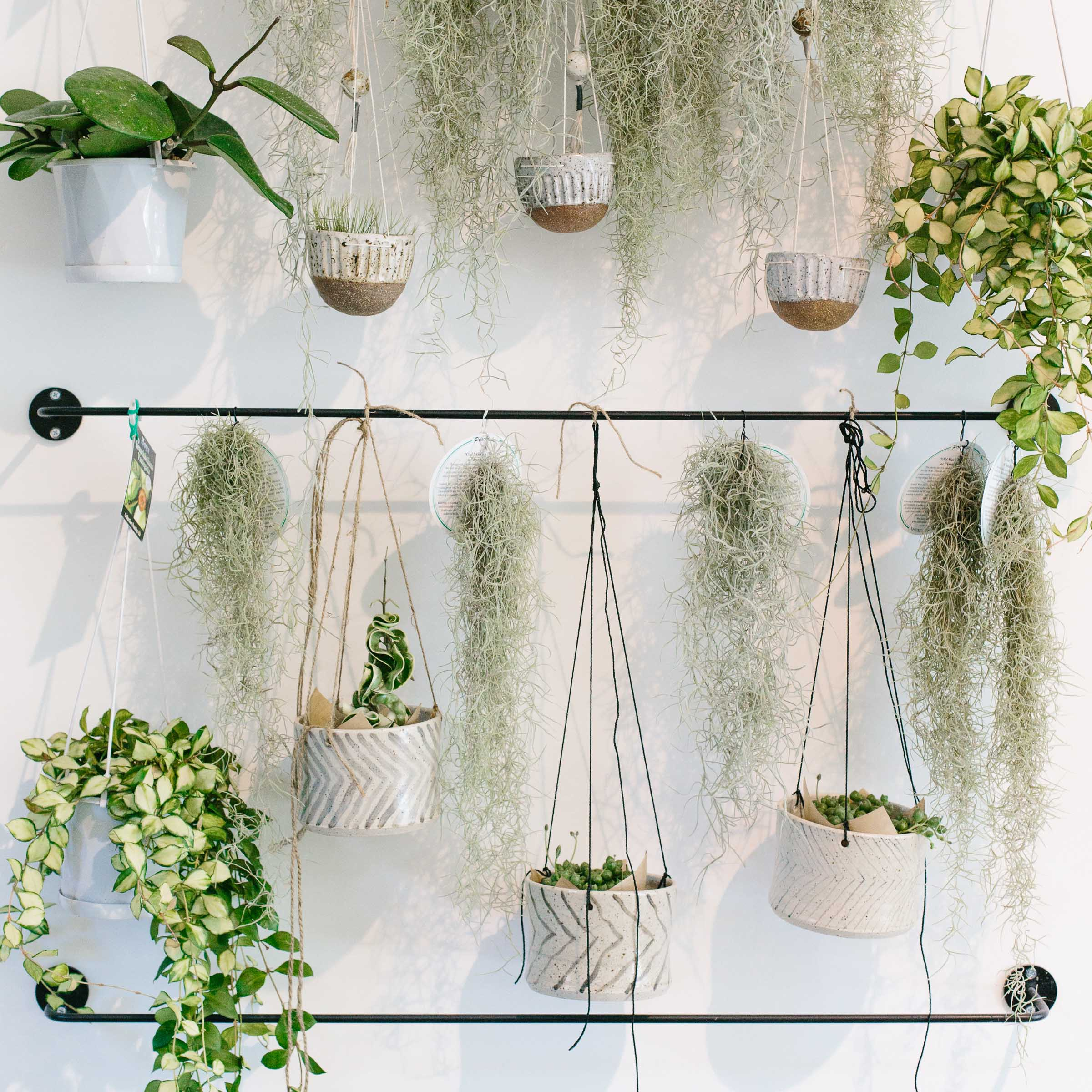 Hanging planters and air plants hang from mounted black steels rods