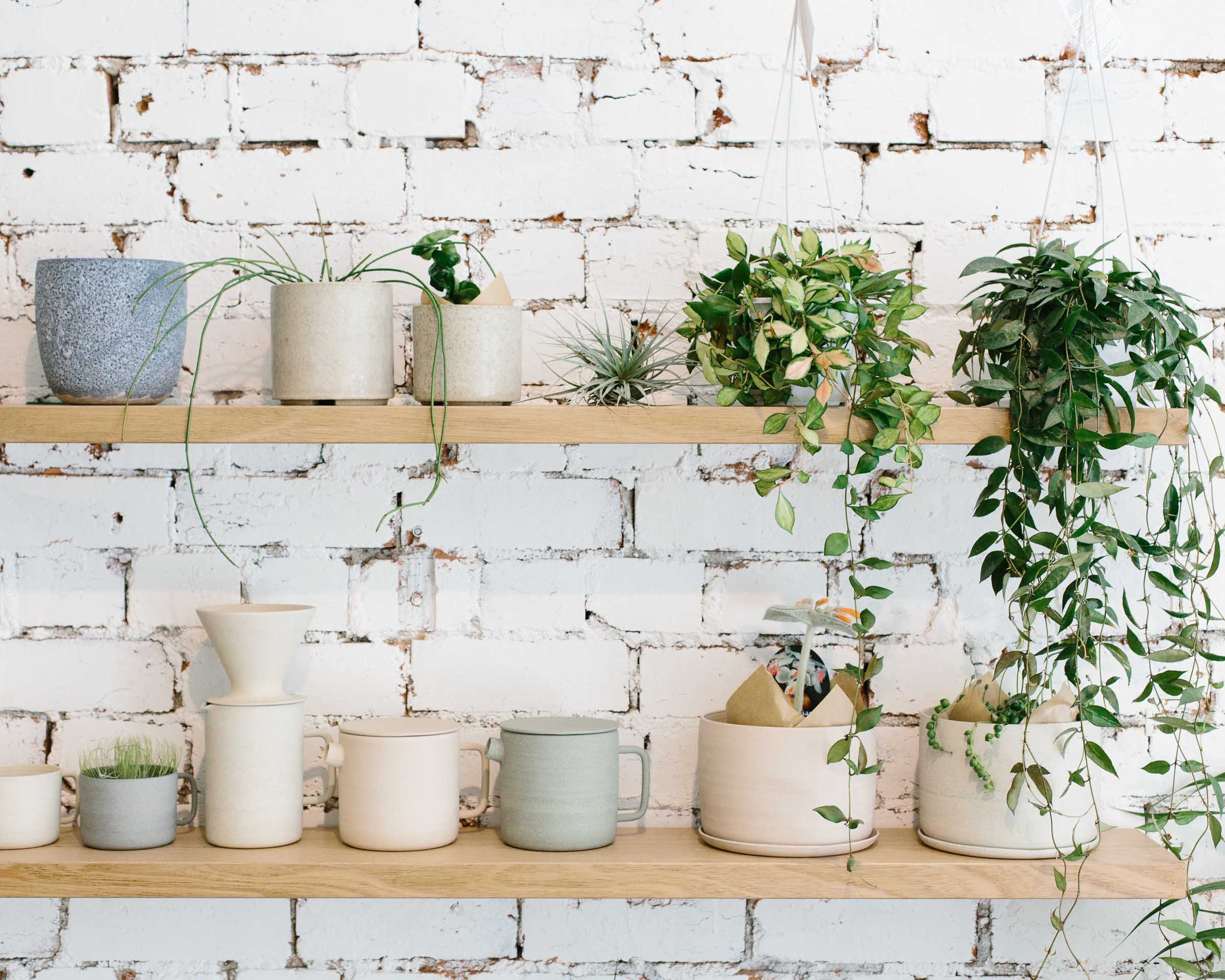 Ceramics made in Melbourne perfect for plants