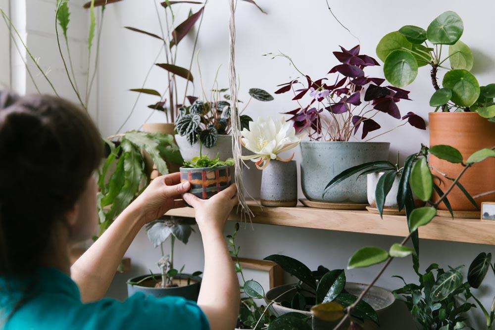 Laura Veleff of ceramic label Leaf and Thread arranges her pot plants in the studio