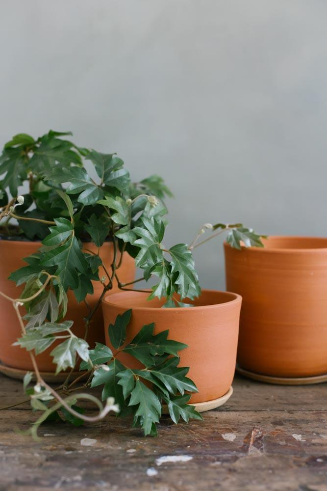 Earthy orange terracotta planters